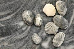 Seashells grises en la arena gris fotografía de archivo libre de regalías
