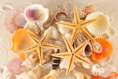 Seashells group Royalty Free Stock Image