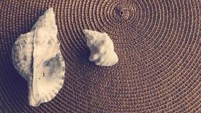 Seashells Group. Beautiful Seashells group over natural tapestry Royalty Free Stock Photos