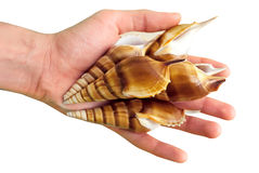 Seashells in hand Royalty Free Stock Photos