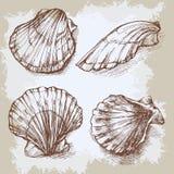 Seashells hand drawn  graphic vintage etching sketch, underwater artistic marine ornament Royalty Free Stock Photos