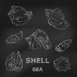 Seashells hand-drawn in a sketchy style on a blackboard. Vector Stock Image