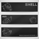 Seashells hand-drawn in a sketchy style on a blackboard. Vector Stock Photos