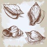 Seashells hand drawn vector graphic vintage sketch Stock Image