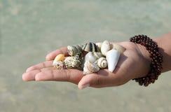 Seashells an Hand gehalten Lizenzfreies Stockbild