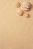 seashells handmade бумаги Стоковое Фото