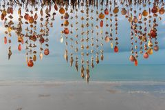 Seashells hanging on strings for decoration stock photo