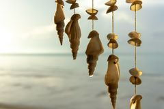 Seashells hanging on strings for decoration. On the beach royalty free stock images