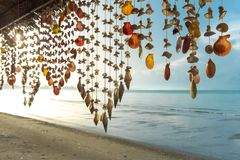 Seashells hanging on strings for decoration. On the beach stock photography