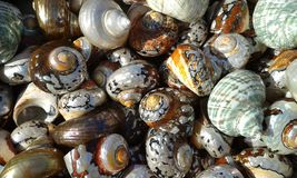 Seashells. Heraklion. Crete. Greece. Assorted shells Stock Photos