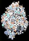 Seashells hermosos con los granos Fotografía de archivo libre de regalías