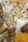 Seashells in High Key Royalty Free Stock Photos