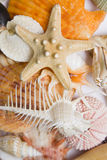 Seashells in High Key Royalty Free Stock Photo
