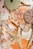 Seashells in High Key Stock Images