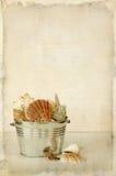 Seashells-Hintergrund stockbilder