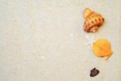 Seashells i biały piaska tło Zdjęcie Royalty Free