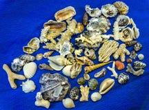 Seashells i korale od Wietnam fotografia stock