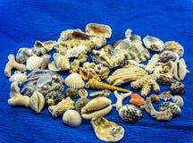 Seashells i korale od Wietnam obraz royalty free