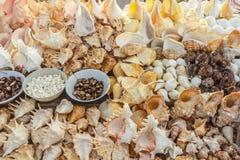 Seashells i korale wystawiający dla sprzedaży, Marina plaża, Chennai, India, 19 2017 Aug Fotografia Royalty Free