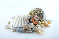 Seashells i morze kamienie Zdjęcie Royalty Free