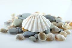 Seashells i morze kamienie Zdjęcia Royalty Free