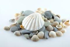 Seashells i morze kamienie Zdjęcie Stock
