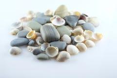 Seashells i morze kamienie Obraz Royalty Free