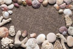 Seashells i otoczaki na grabić Obrazy Stock