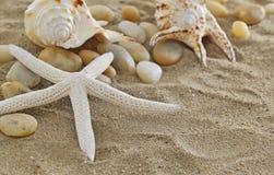 Seashells i rozgwiazda Obrazy Royalty Free