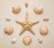 Seashells i rozgwiazda na piaska tle zdjęcia royalty free