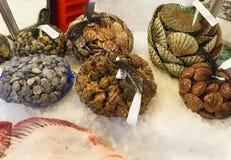 Seashells on ice Stock Photo