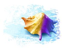 seashells illustrazione disegnata a mano di vettore colourful royalty illustrazione gratis
