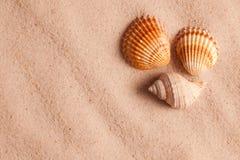 Seashells im Sand Stockfotos