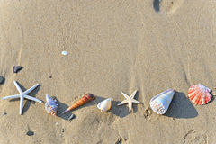 Seashells im Sand Stockfoto
