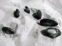 Seashells im Sand Stockbild