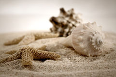 Seashells im Sand Lizenzfreie Stockfotos