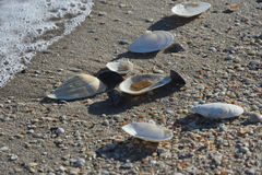 Seashells. Image of a sea landscape with sea and seashells Royalty Free Stock Images