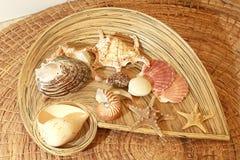 Seashells In Basket Stock Image