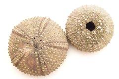 Seashells isolated Stock Photography