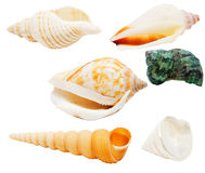 Seashells isolated Royalty Free Stock Photo