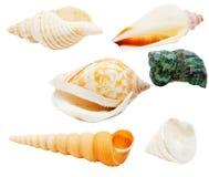 Seashells isolated royalty free stock photo