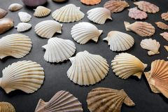 Seashells isolated on black background Royalty Free Stock Photo