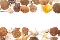 Seashells isolated on the white background Stock Image