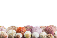 Seashells isolated on a white background Stock Photos