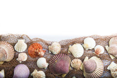 Seashells isolated on a white background Stock Photo
