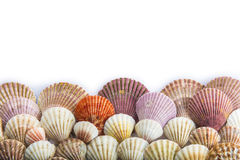 Seashells isolated on a white background Royalty Free Stock Image