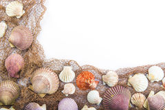 Seashells isolated on a white background Stock Photography
