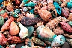 Seashells kolekci zbliżenie Obraz Royalty Free