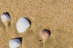 Seashells laying in the sand Royalty Free Stock Photos