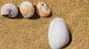 Seashells laying in the sand Royalty Free Stock Photo